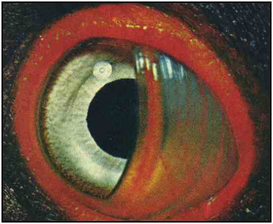 King Vulture Eye Detail (Copyright ©1969)